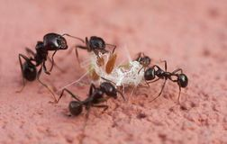 Free Ants Royalty Free Stock Photography - 120917577