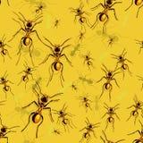 Ants Stock Image
