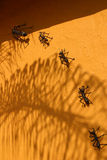 Ants Stock Photos