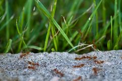 Ants in action Royalty Free Stock Photography