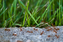 Ants in action Stock Photography