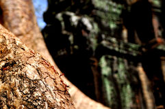 Ants in Angkor Wat Royalty Free Stock Images
