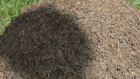 Ants and Anthill in a Shadow stock footage