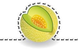 Ants around cantaloupe melon slice Royalty Free Stock Photos