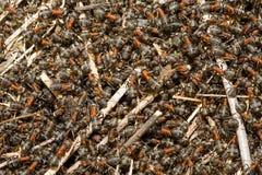 Ants background Stock Photos