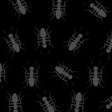 Ants Background Royalty Free Stock Images