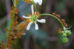 Ants and bee. Ants helping each other to move a bee royalty free stock images
