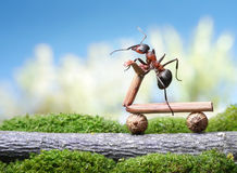 Ants bicycle Royalty Free Stock Image