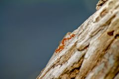 Ants body talking on a bark stock images