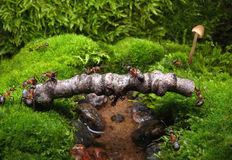 ants build bridge Stock Images