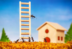 Ants build a house with ladder. Teamwork concept royalty free stock photos