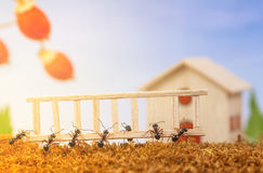 Ants build a house with ladder Royalty Free Stock Photo