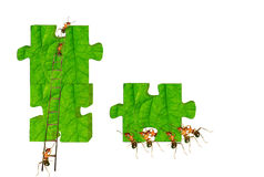 Ants building Royalty Free Stock Photo