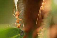 The ants building the nest. Royalty Free Stock Photos