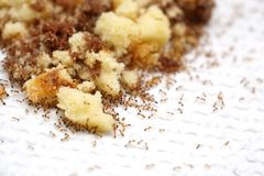 Ants on a cake trap. On tissue paper royalty free stock images