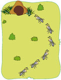 Ants carry food. Ant colony in the grass carrying food to anthill. EPS file available Stock Photos