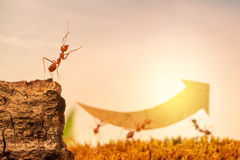 Ants carry rising arrow for business graph stock photo