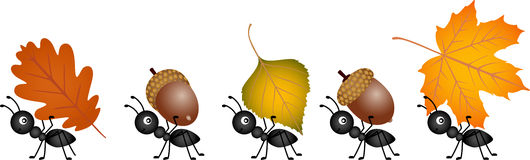 Ants carrying autumn leaves and acorns Royalty Free Stock Photos