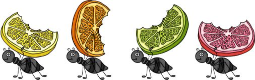 Ants carrying citrus fruit slices Stock Image