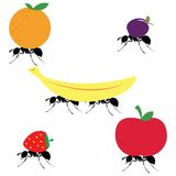 Ants carrying different fruits Stock Image