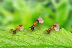 Ants carrying food Stock Photos