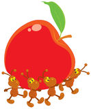 Ants carrying a red apple Stock Photography