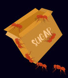 Ants Carrying Sugar from Packet Stock Photo