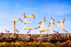 Ants carrying wording team stock photo