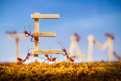 Ants carrying wording team stock images