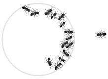 Ants in a circle. A drawing of ants in a circle. One ant is out of the circle vector illustration