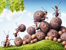 Free Ants Collecting Seeds In Stock, Teamwork Royalty Free Stock Images - 31802889