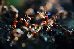 Ants colony Stock Images