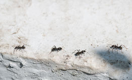Ants on concrete surface. Royalty Free Stock Images
