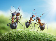 Ants dancing under the sun. Ants know to play games, scientific fact Stock Photography
