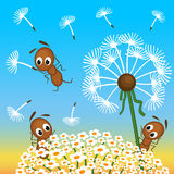 Ants and dandelion Stock Photos