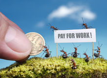 Ants demand payment for work. Ants demanding payment for work with bill Stock Photos