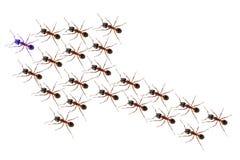 Ants discipline Royalty Free Stock Photography