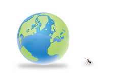 Ants and earth Royalty Free Stock Images