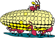 Ants eating corn. Ants carrying corn from picnic Royalty Free Stock Images