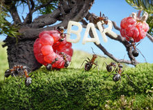 Ants enjoy juicy fruits, fresh juice bar Royalty Free Stock Image