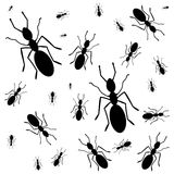 Ants everywhere - illustration Royalty Free Stock Images