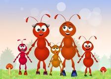 Ants family Stock Photos