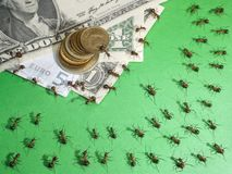 Ants financial crisis. Financial crisis in the anthill Royalty Free Stock Images