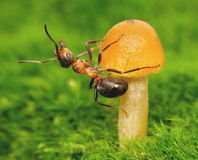 Ants fitness and mushroom. Ant exercises on a mushroom stock photo