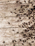 Ants in a forest Stock Photography