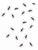 Ants on graph paper Stock Image