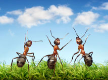 Ants on grass royalty free stock images