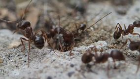 Ants guarding the entrance Stock Image
