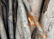 Ants holding animal bone to the nest Stock Photos