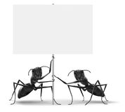 Ants holding blank protest or advertising placard Stock Photo